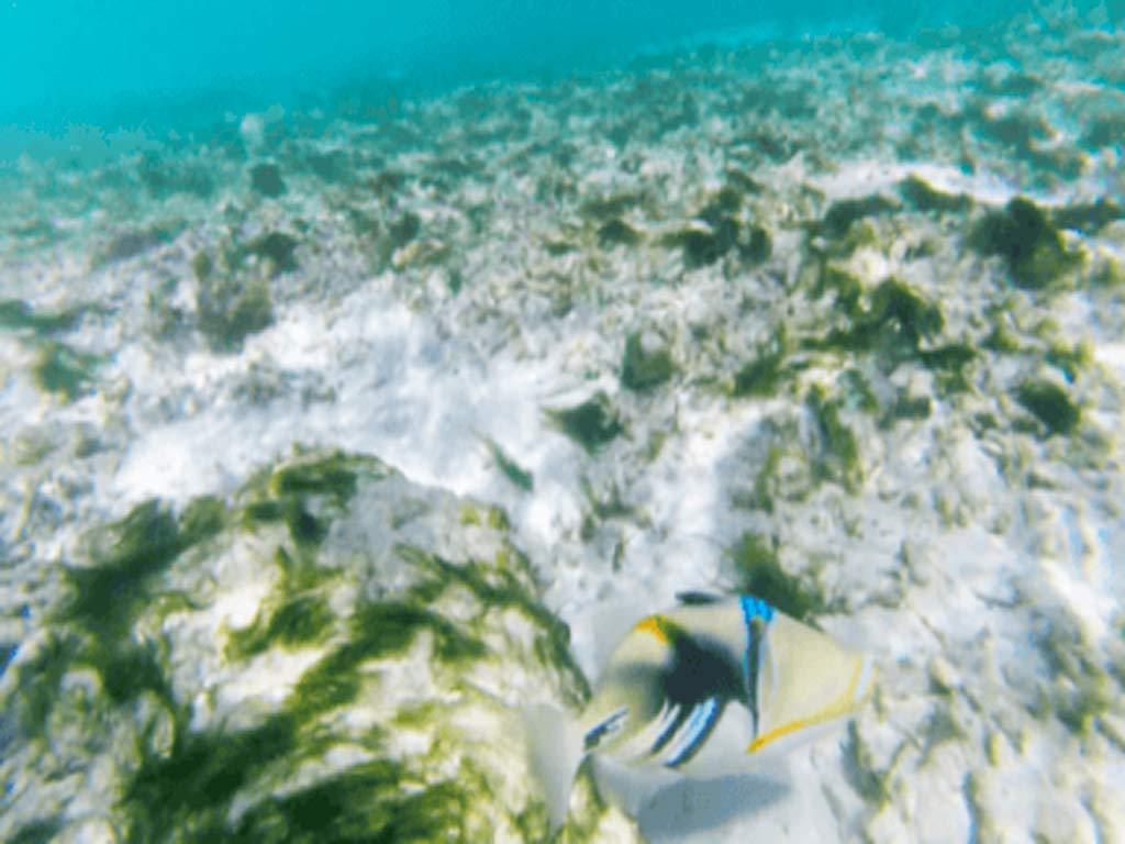 peces en gulhi