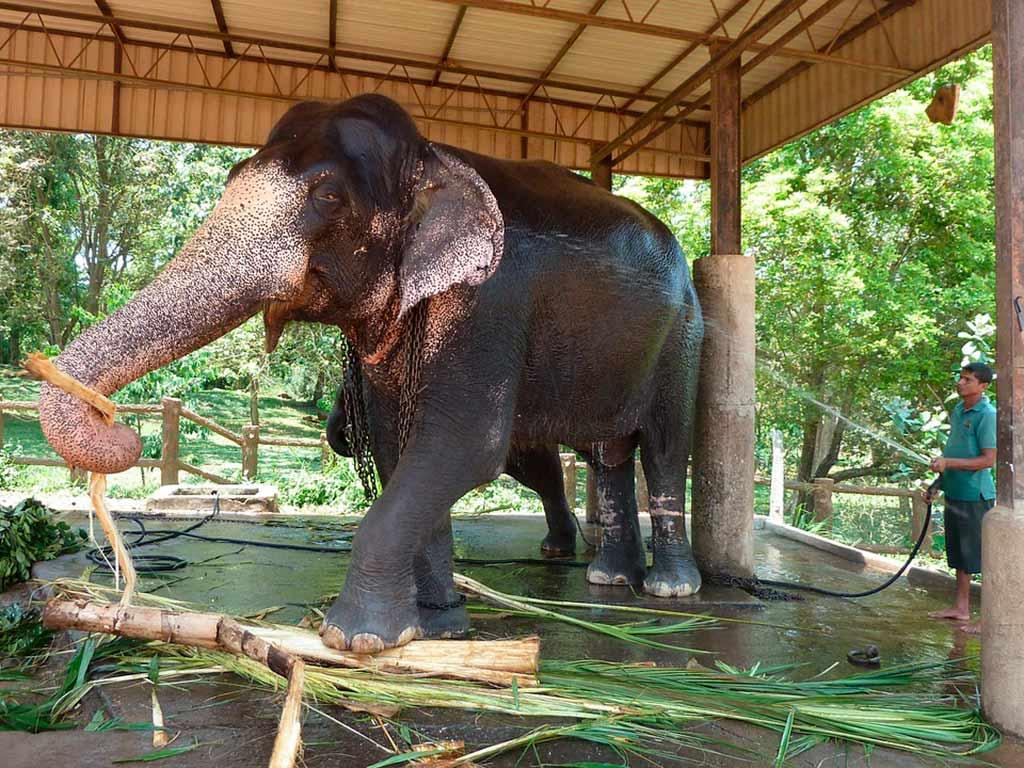 cosas imprescindibles que no hay que hacer en chiang Mai