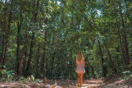 naturaleza selva monos koh rong samloem